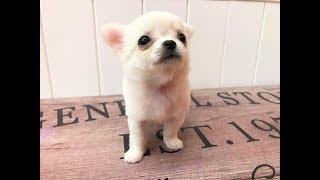 仔犬のお店プリティードック(大阪府門真市上野口町6-1) 072-882-8567 ...