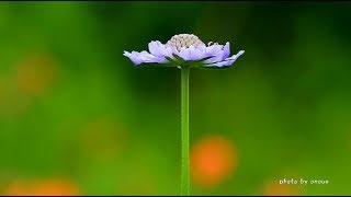 花が咲き蝶が舞う8月の志賀高原・4K撮影