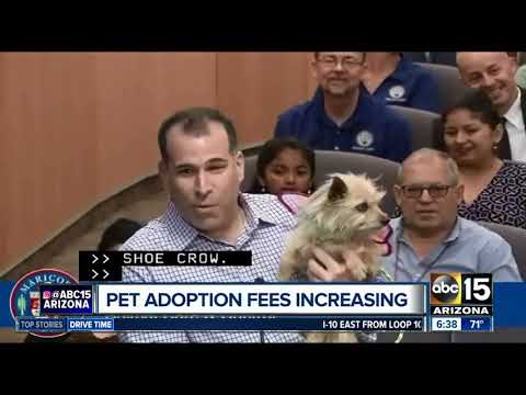 Maricopa County Animal Care and Control raising fees to pay for animal care