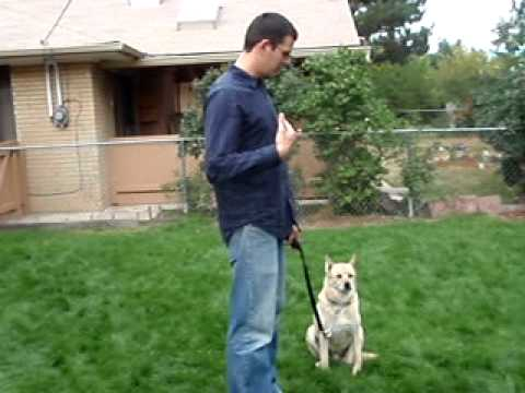 Teach Your Dog Submission