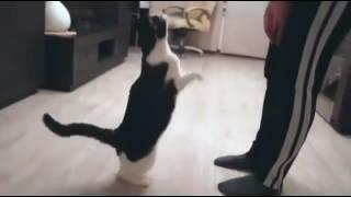 Кошка ... возьми меня на ручки)))
