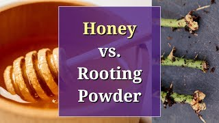 Honey vs Rooting Powder: A Propagation Trial