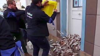 Франция объявила Англии новую рыбную войну. Нормандские рыбаки жестко протестуют