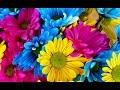 ¿Cómo decorar con plantas o flores de interior? Ideas de decoración
