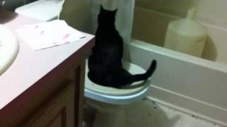 Cat peeing in toilet stage 2 city kitty toilet training