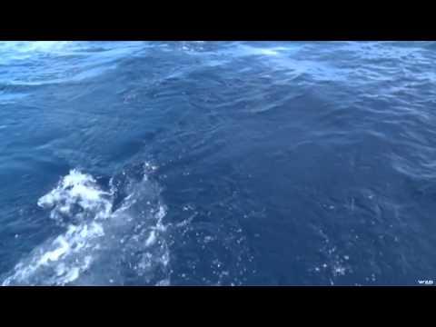 Fish TV - Antigua