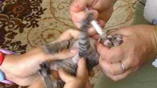 Вакцинация кошек . Все О Домашних Животных.