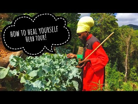 Learn To Heal Yourself! Ital Herb Tour with Priest Kailash l Vegan Electric foods