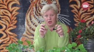 Персональный блог садовода и огородника Светланы Кацаповой 38 вып (защита от вредителей)