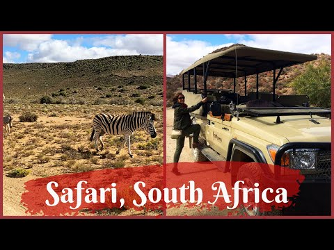 Travel Vlog: The Big Five animals of Africa