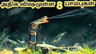 அதிக விஷமுள்ள பாம்புகள் ||  Dangerous Snakes  || Tamil Galatta News