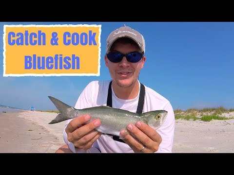 Catch & Cook Bluefish - Surf Fishing Gulf Shores
