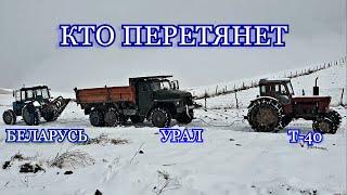 Беларусь 1221 против Урал и Т-40. Кто Перетянет???