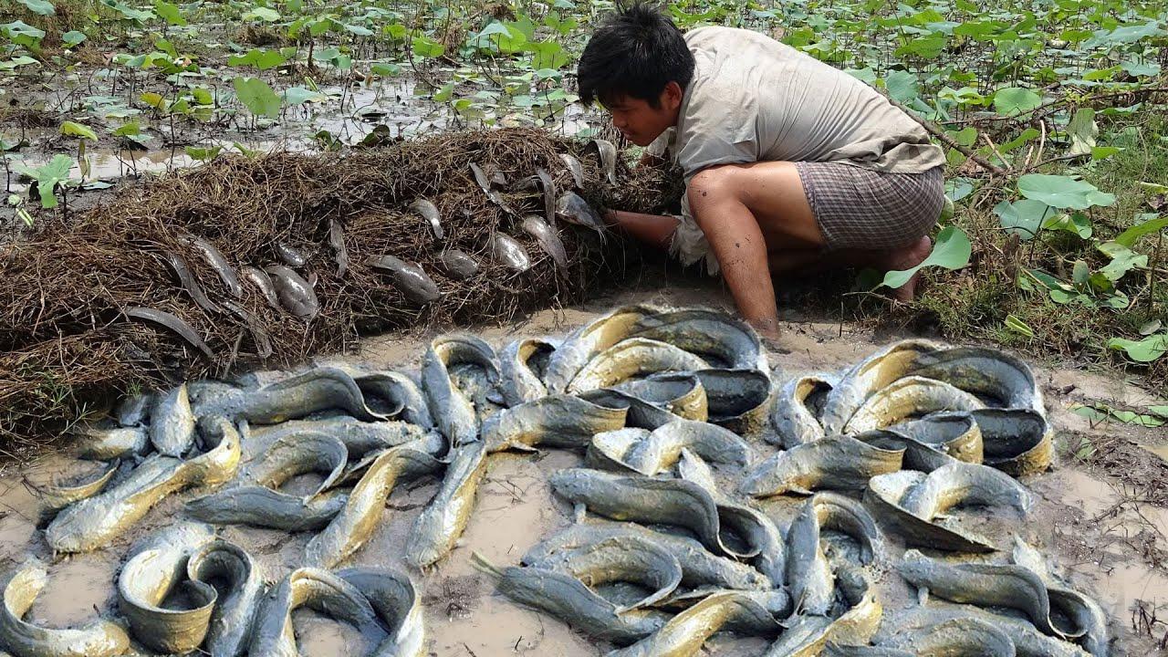 OMG!!! Catching catfish mud by hand in rainy season 2020