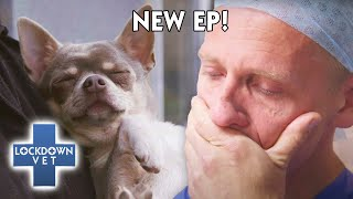 Routine Surgery on FRIEND'S DOG goes HORRIBLY WRONG   | Full Episode | Lockdown Vet
