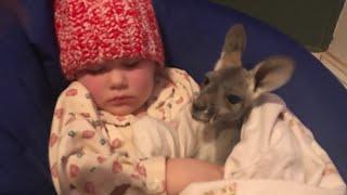 1か月間我が家で生後5ヶ月の赤ちゃんカンガルーを飼うことになりました...