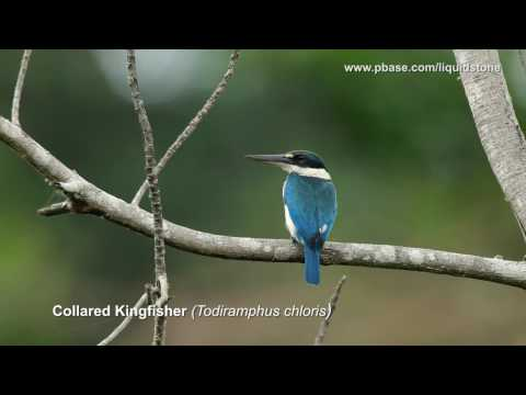 Avian Treasures of the Philippines (Second of a Series)