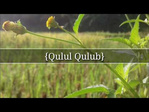 Sholawat Merdu Menyentuh Hati Qulul Qulub
