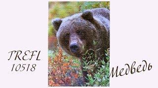 """Обзор пазла Trefl 10518 """"Медведь Гризли"""" (1000 деталей)"""