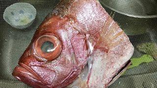 【丸家小廚】キメタイのかぶとに | 紅燒金目鯛魚頭