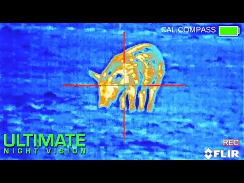 Wild Boar Hunting with Thermal | 75 Hogs Down with the FLIR PTS536