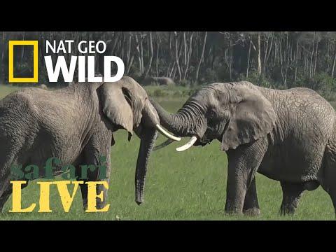 Safari Live - Day 75 | Nat Geo WILD