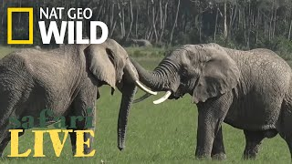 Safari Live - Day 75 | Nat Geo WILD thumbnail