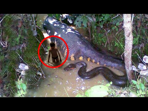 Thumbnail: WORLD'S BIGGEST SNAKE EVER! GIANT ANACONDA