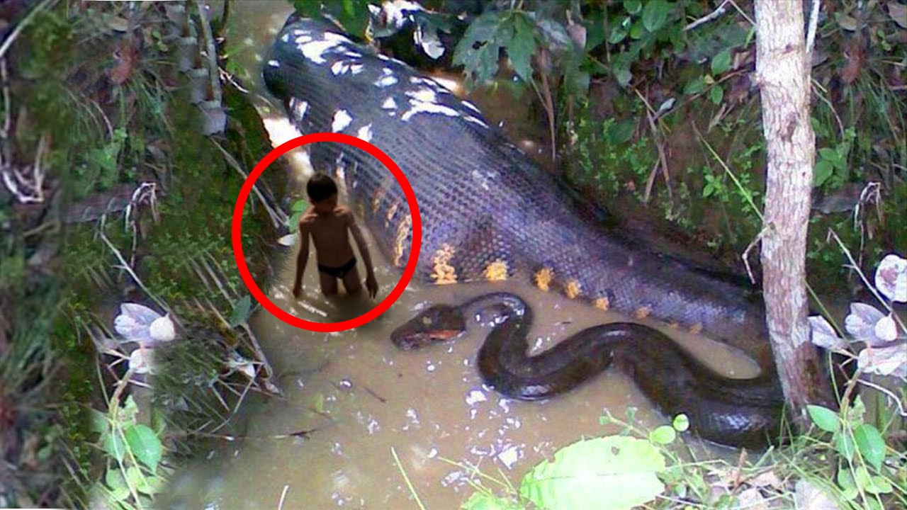 WORLD'S BIGGEST SNAKE EVER! GIANT ANACONDA - YouTube