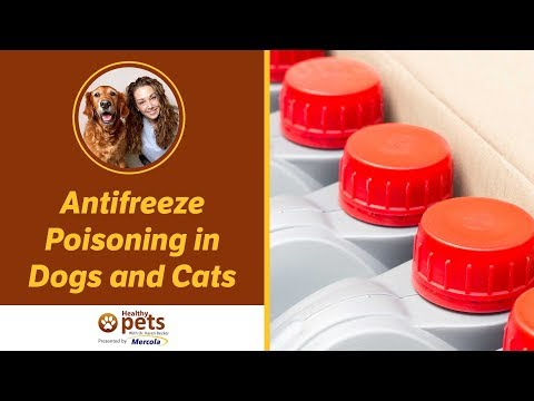 Dr  Becker Discusses Antifreeze Poisoning - YouTube
