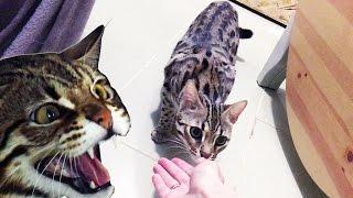 """ПРИРУЧИЛИ ГУСЮ? Успехи с одичавшим котом, скрытая камера не нужна/ """"тайная жизнь домашних животных"""""""