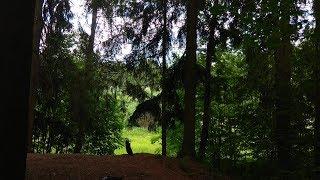 6 часов! Насыщенное пение птиц в густом лесу (чёрный экран)