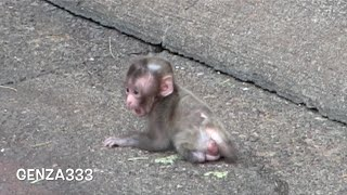 Call the mom crying baby monkey