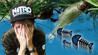 Drama mit toten Fischen im XXL Aquarium...