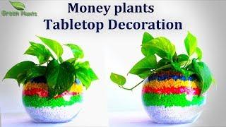 Money plant Tabletop Decoration | Money plant Growing Ideas | Money plant Decoration//GREEN PLANTS