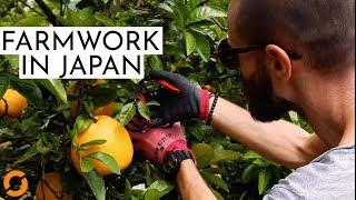 Arbeiten auf einer JAPANISCHEN Farm -- Farmwork and Travel in Japan (Reportage)