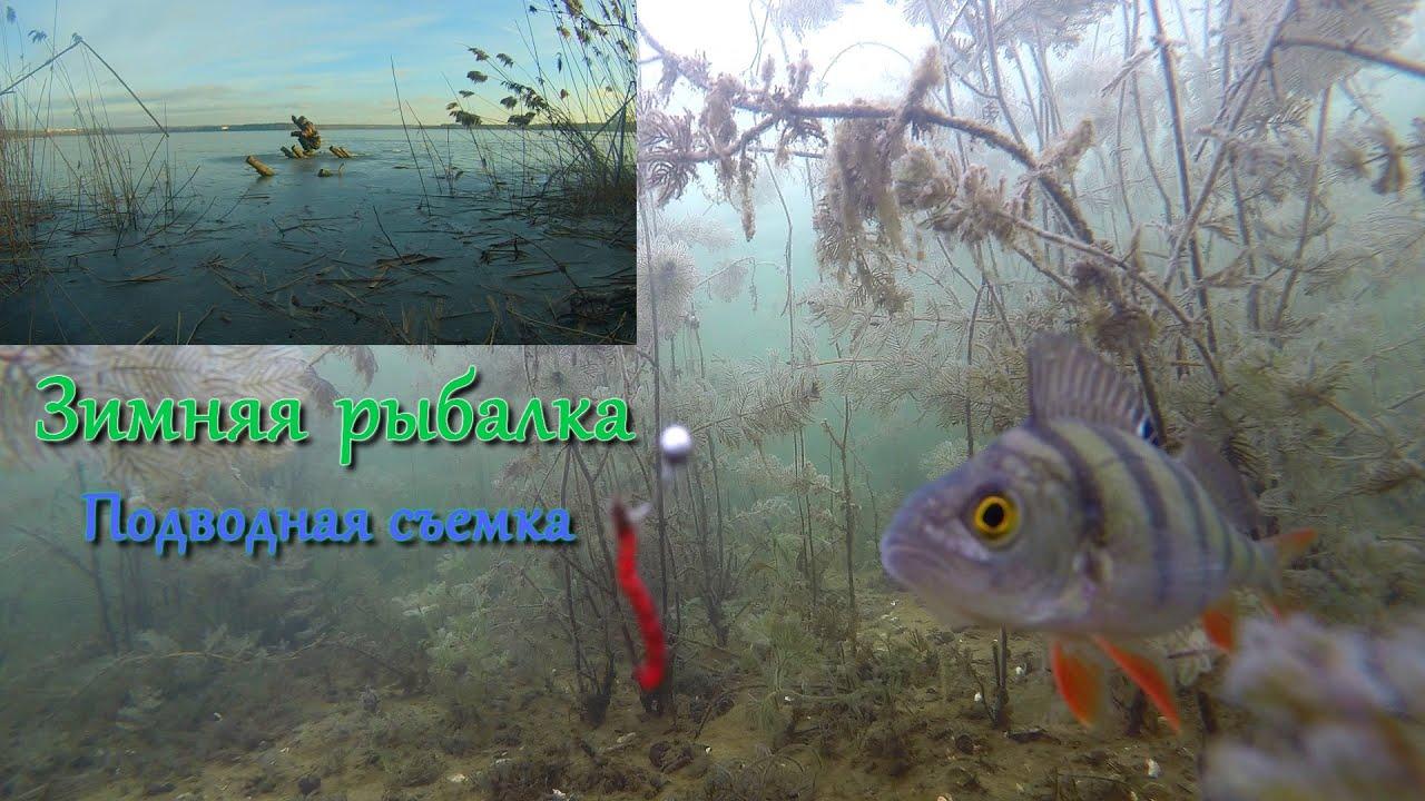 зимняя рыбалка леща прикормка снасти