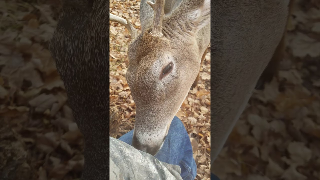 Download Take my boys out squirrel hunting for the first time and a deer walked right up to us