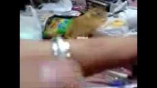 謎の生物 半透明の鼠が出現