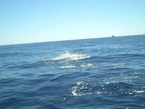 Marlin Fishing Cabo 2009!