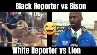 NBC Reporter Deion Broxton & a BISON vs Charlie Starmer & a LION 😆🤣