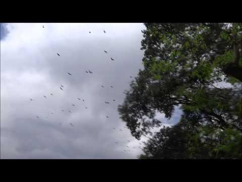 Visit Sri Lanka. Botanical Garden Kandy 2014 - Serene Vacation