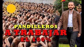PRESIDENTE CUMPLE PROMESA  HASTA A LOS PANDILLEROS ¿porque?