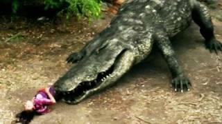 Mega Python VS Gatoroid (2011) - Official Trailer