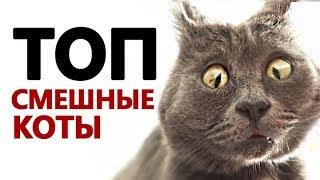 ПРИКОЛЫ С КОТАМИ топ подборка 2018 JOKES WITH CATS Funny cat Смешные кошки и котята! коты спят