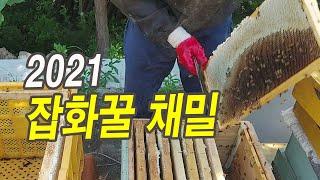 2021 잡화꿀(야생화꿀) 채밀