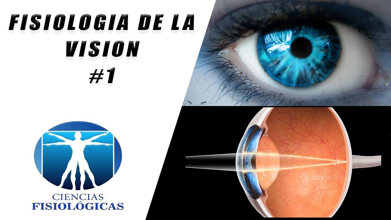 Fisiologia de la Vision #1 - YouTube