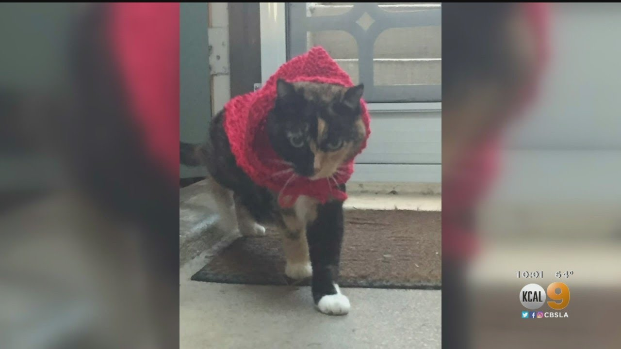 Caught On Camera: Uber Eats Driver Suspected Of Stealing Beloved Cat While On Delivery