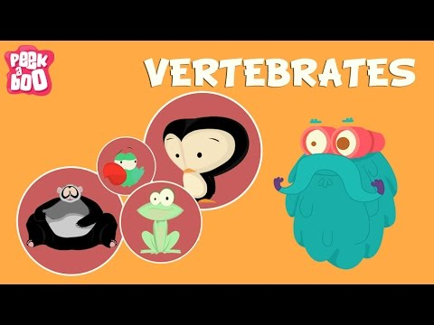 Vertebrates | The Dr. Binocs Show | Educational Videos For K