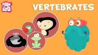 Vertebrates | The Dr. Binocs Show | Educational Videos For Kids
